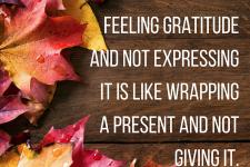 gratitude-ashley-shipley